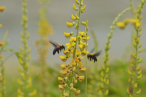 Бесплатное стоковое фото с макрофотографии, насекомое и цветок, насекомые, пчела плотник
