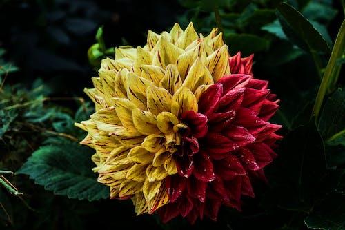 Fotos de stock gratuitas de flor, flora, floración, planta