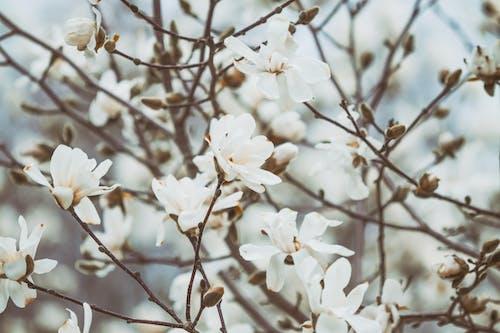 Gratis arkivbilde med abstrakt bakgrunn, blomster, blomstre, fjær