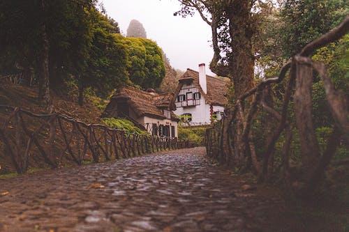 Gratis stockfoto met architectuur, begeleiding, bomen, fotografie met lage hoek