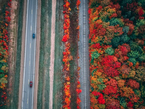 Magnificent landscape of autumn forest near highway