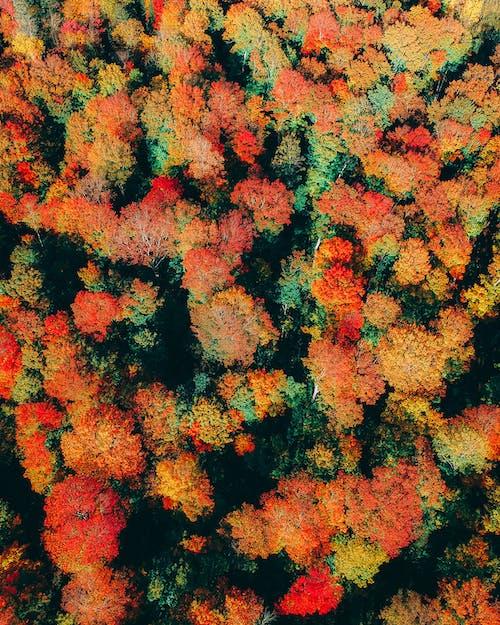 天性, 季節, 樹木, 無人機攝影 的 免費圖庫相片