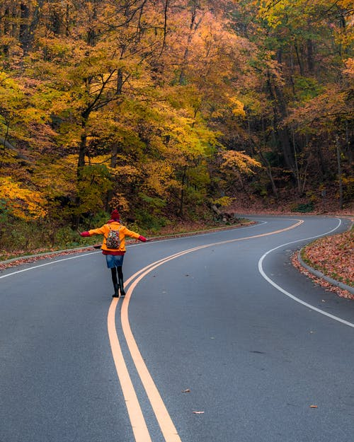 Immagine gratuita di alberi, asfalto, autostrada, autunno