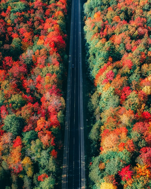Bird's Eye View Of Trees During Daytime