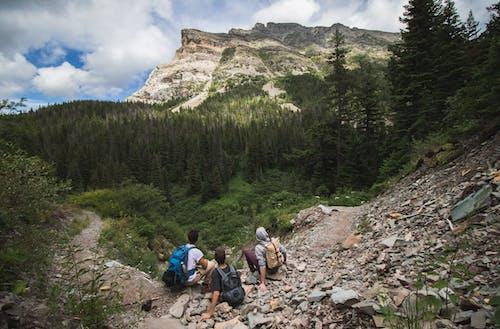 açık hava, ağaçlar, çıkmak, dağ içeren Ücretsiz stok fotoğraf