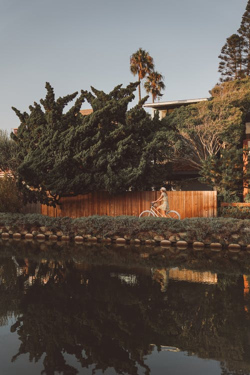 Photo of Person Riding Bike Near Green Leafy Tree Near Wooden Fence