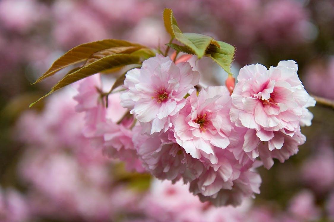 árbol, flor, flora