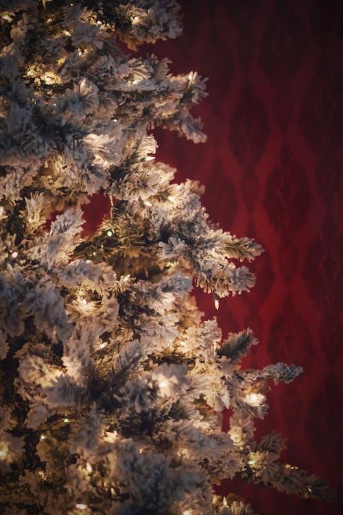 Kostnadsfri bild av jul, julgran, tapet, vintage