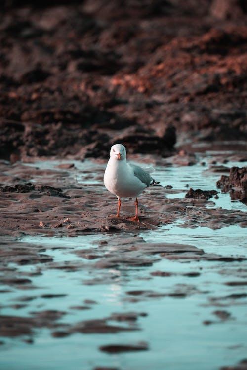 Безкоштовне стокове фото на тему «глибина різкості, дзьоб, дика природа, дикий»