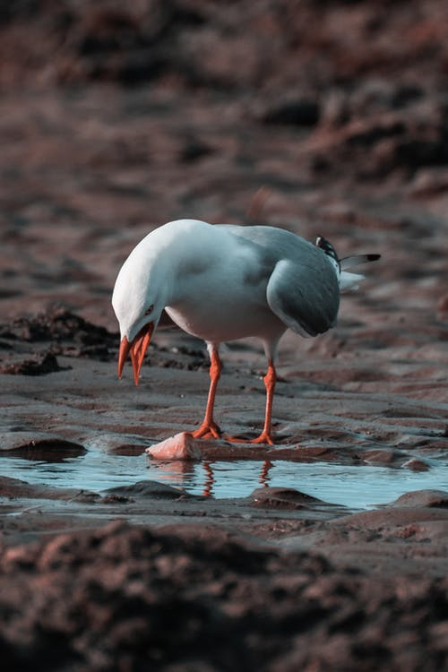 Gray and White Bird on Sand