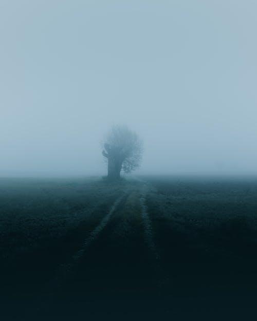 ağaç, alan, siluet, sis içeren Ücretsiz stok fotoğraf