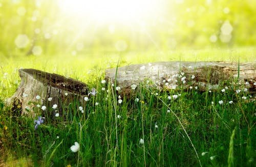 Green Grasses With White Flowers