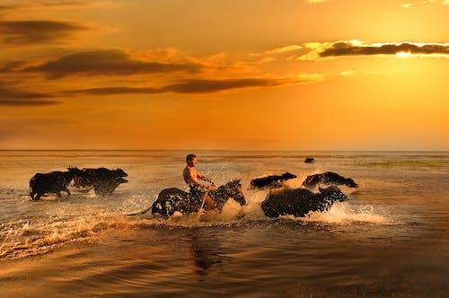 คลังภาพถ่ายฟรี ของ ชายหาด, ตะวันลับฟ้า, ทะเล