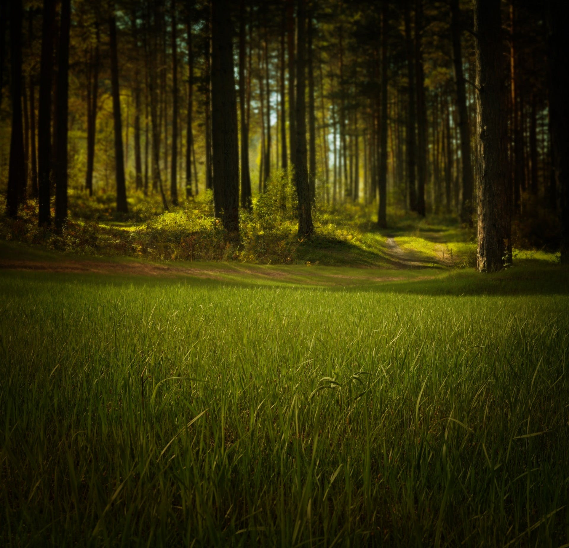 Green Grass Beside Trees Nature Photography