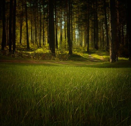 Gratis lagerfoto af bane, græs, grøn, landskab