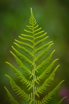 Close Up Photography of Fern Plant