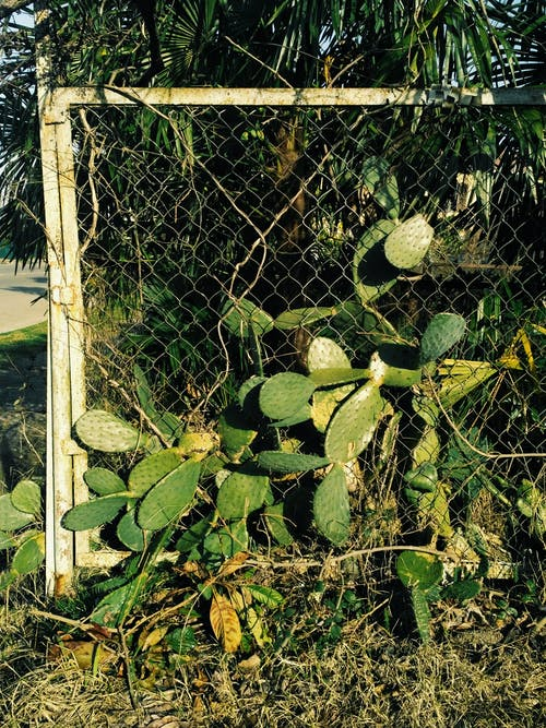 Green Plants Beside Cyclone Fence