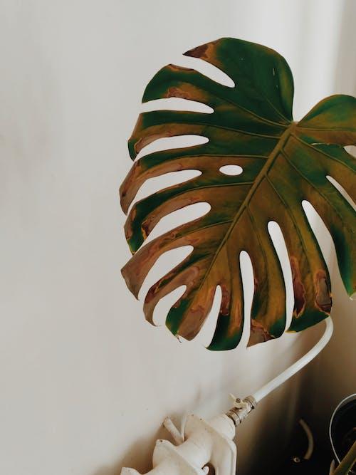 Imagine de stoc gratuită din arid, concentrare, culori, frunză