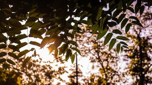Foto stok gratis alam, dedaunan musim gugur, matahari, menengadah