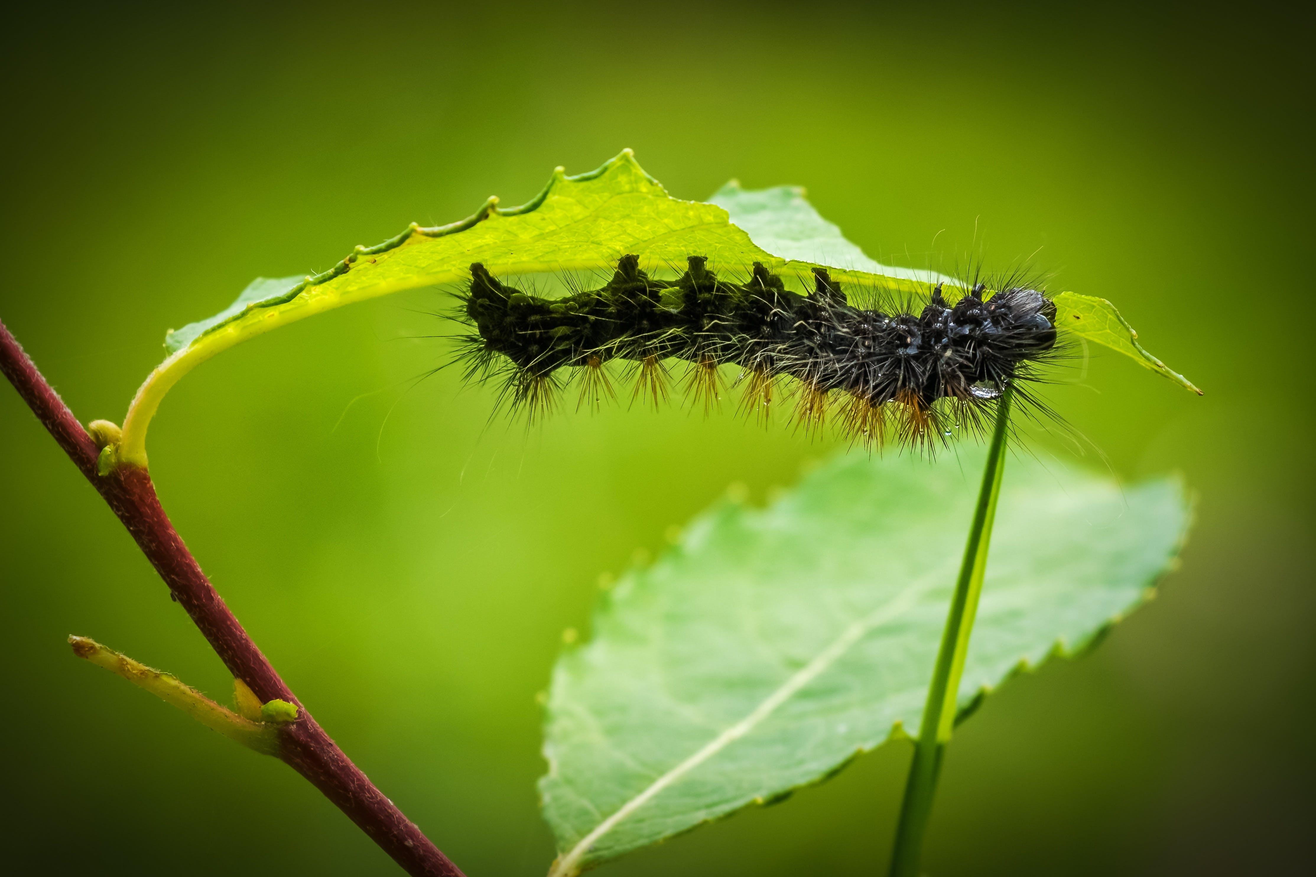 Black Moth on Green Leaf Plant