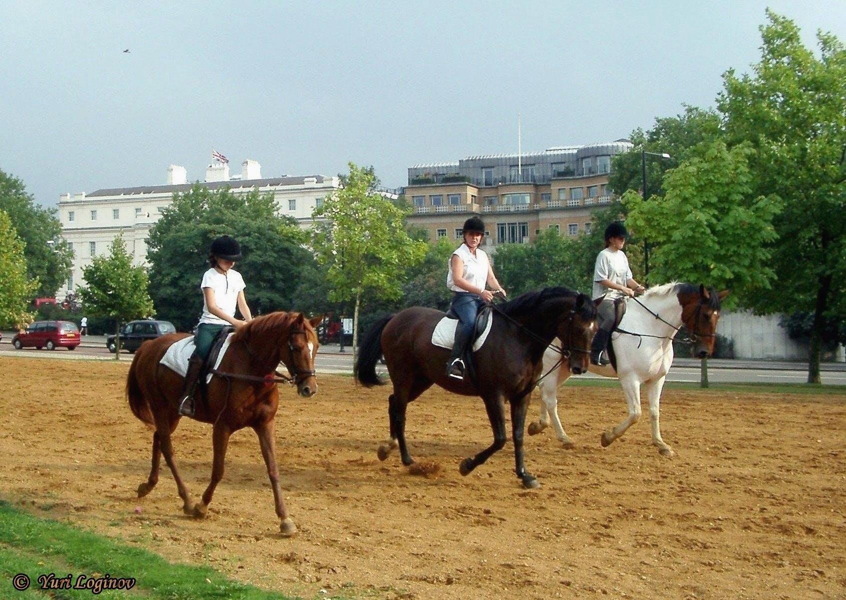 Free stock photo of england, london, united kingdom, Kensington Gardens