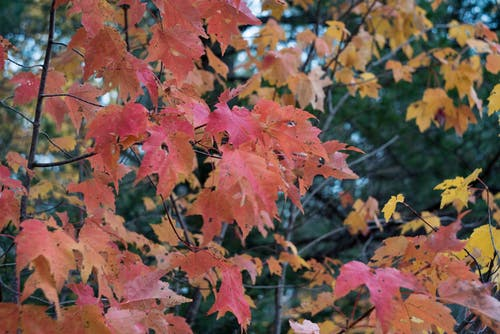 Free stock photo of autumn color, autumn colors, autumn leaves