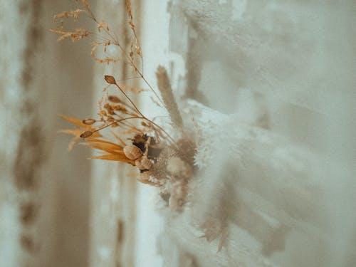 Foto profissional grátis de borrão, brilhante, close, concentração