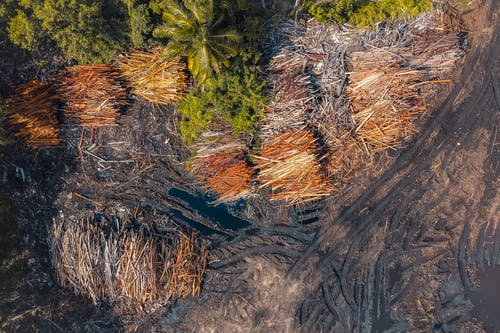 Aerial View of a Logging Site