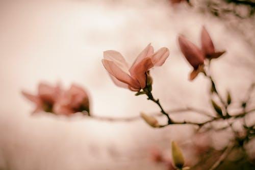 Free stock photo of florida, flower, pink