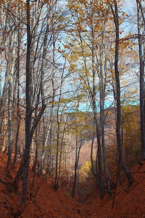 大自然, 天性, 戶外, 森林 的 免費圖庫相片