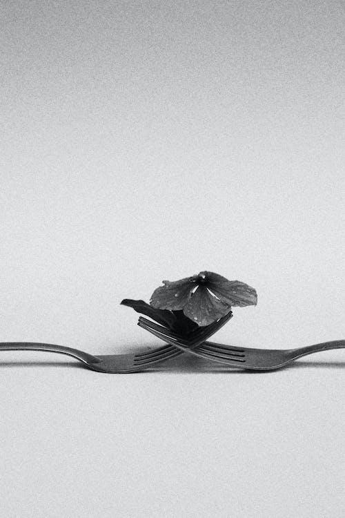 Gray Plastic Forks