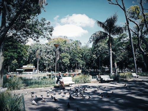 Man Sitting on Bench Near Birds