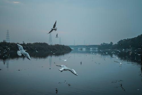 Kostnadsfri bild av damm, fåglar, flod, indianlandskap