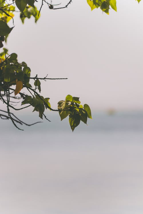 Free stock photo of beach, branch, depth of field, gray