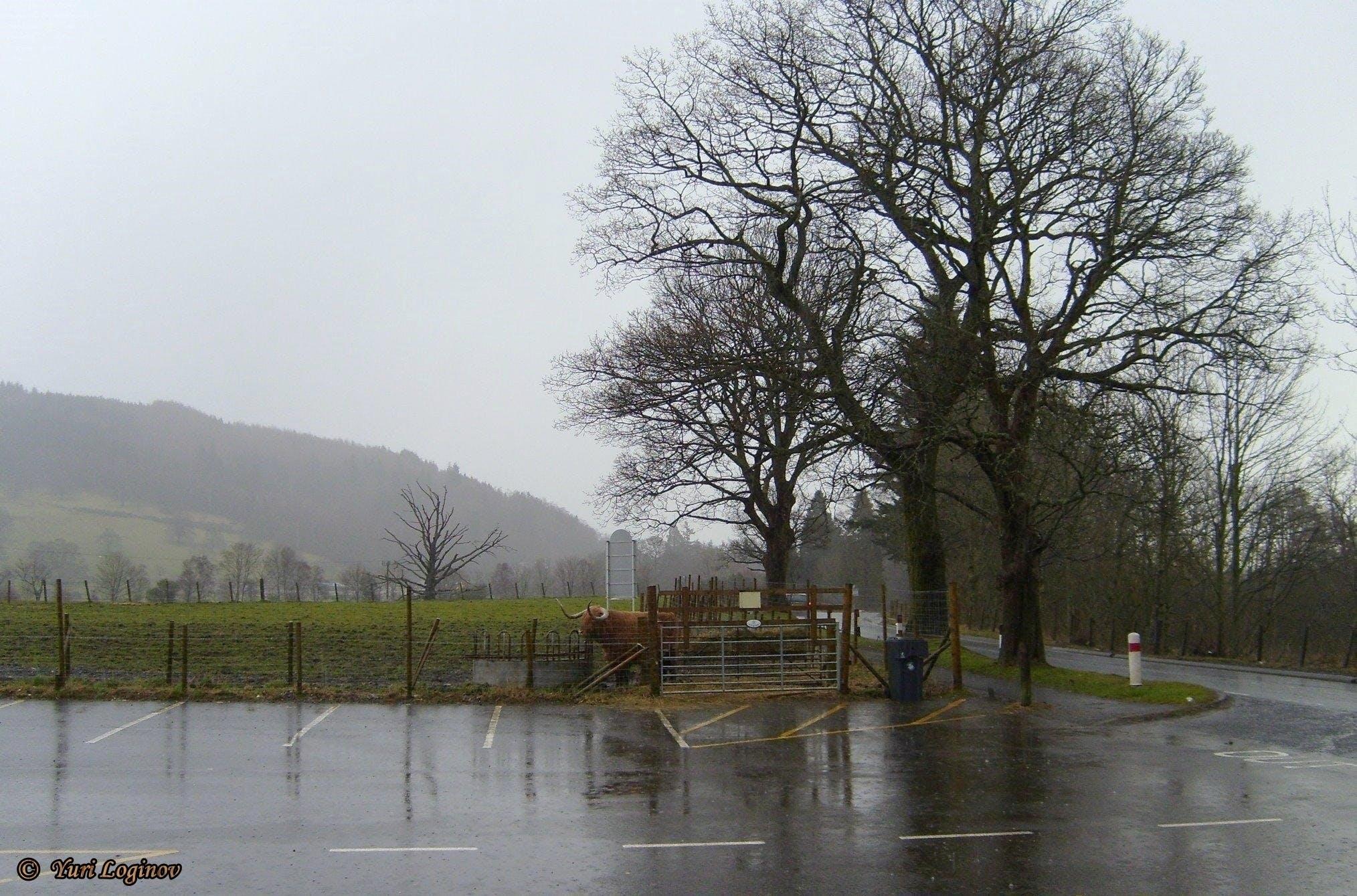 Free stock photo of scotland, united kingdom, Trossachs