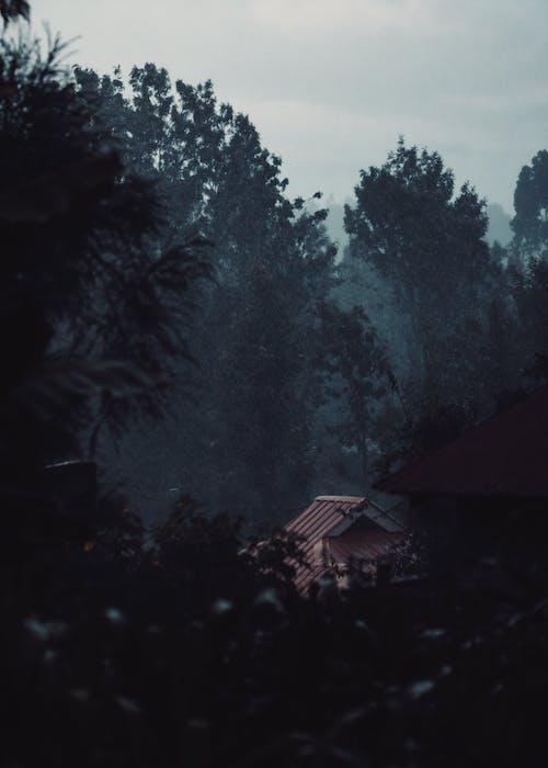Free stock photo of house, lonely, rain, trees