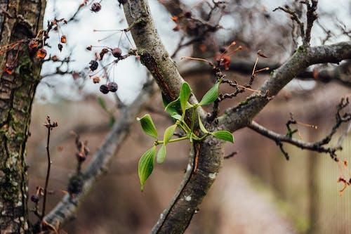 Foto d'estoc gratuïta de arbre, branca, concentrar-se, desenfocament