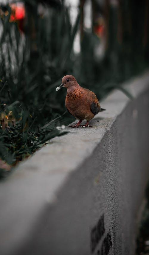 Brown Bird on a Concrete Wall