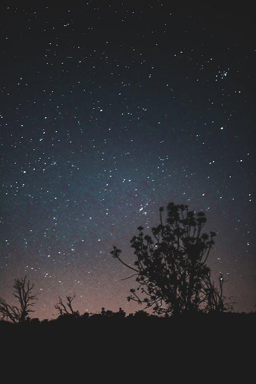 Free stock photo of galaxy, night sky, silhouette