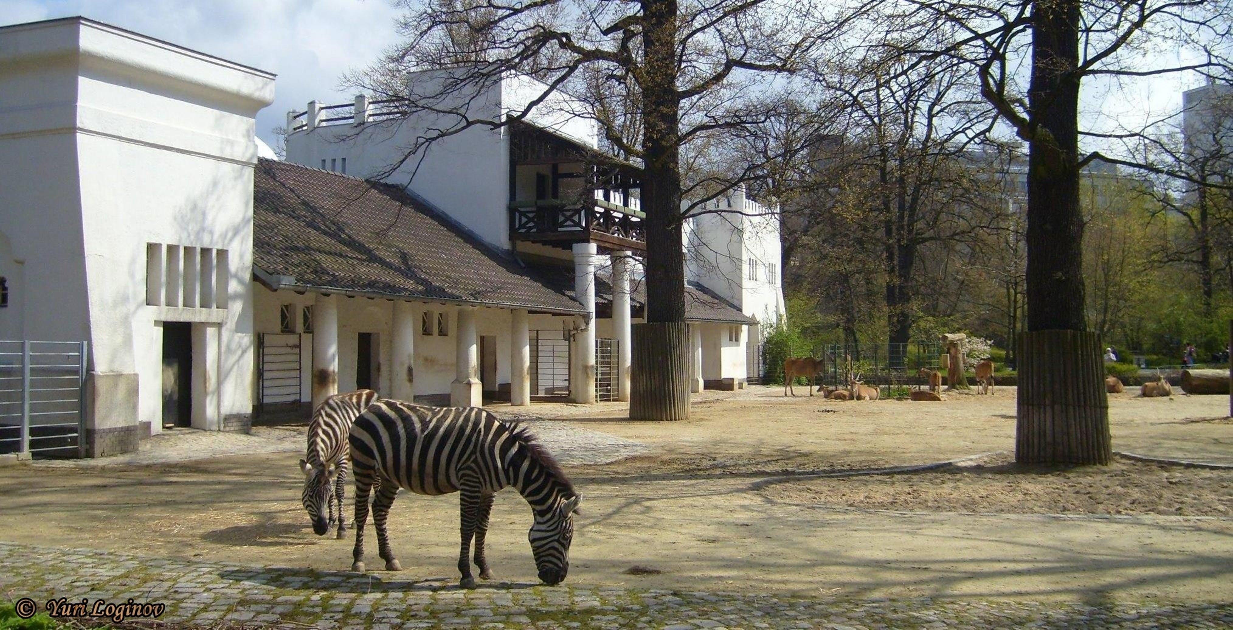 Free stock photo of berlin, germany, tiergarten, deutschland