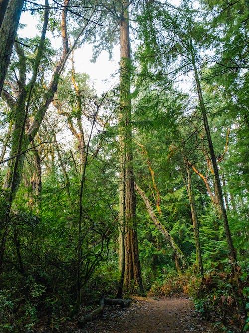 Ảnh lưu trữ miễn phí về cây rừng, che phủ rừng, con đường rừng, đất rừng