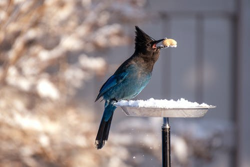 Shallow Focus Photography of Blue and Black Bird