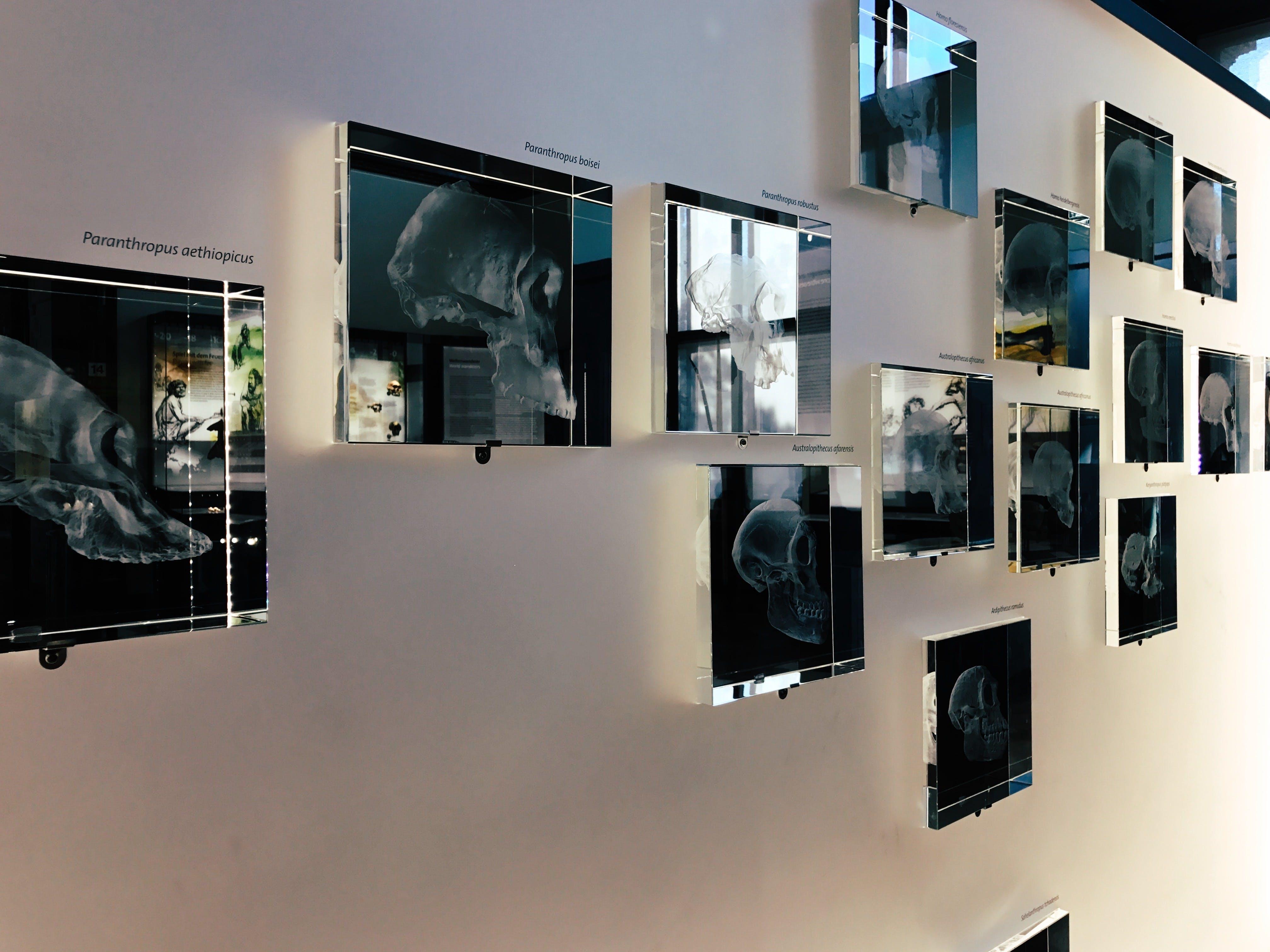 Free stock photo of art, museum, skull