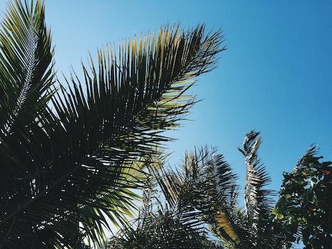 Free stock photo of sky, summer, tree