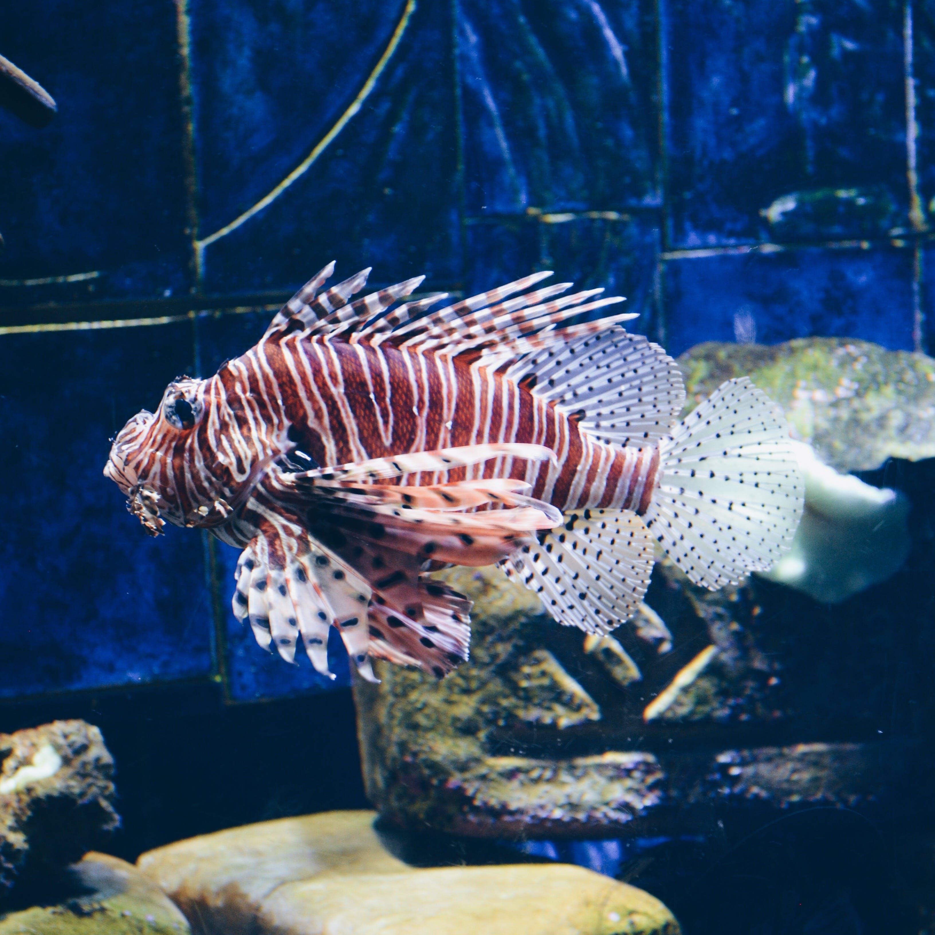 Δωρεάν στοκ φωτογραφιών με θάλασσα, ψάρι