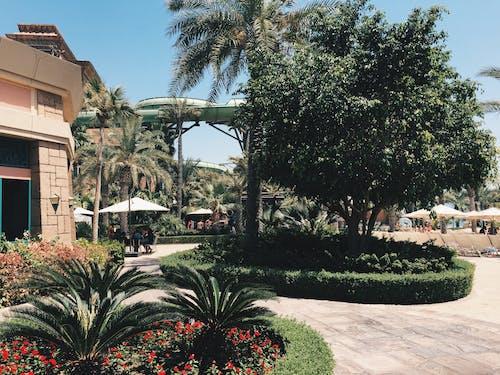 Fotos de stock gratuitas de atlantis, Dubai, la palma, verano