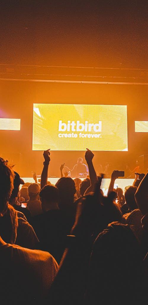 Gratis stockfoto met 2019, album, binnen, bitbird