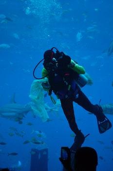 Free stock photo of sea, aquarium