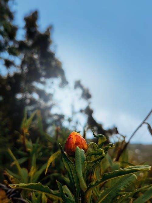 Gratis arkivbilde med landskapsfotografering, mobil fotografering, vakker blomst