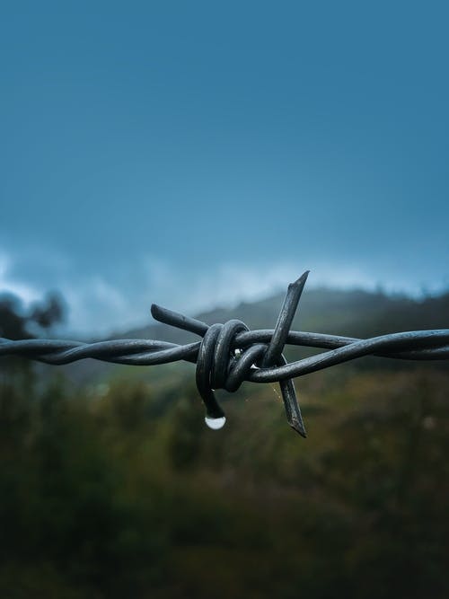 Shallow Focus Photography of Barbed Wire